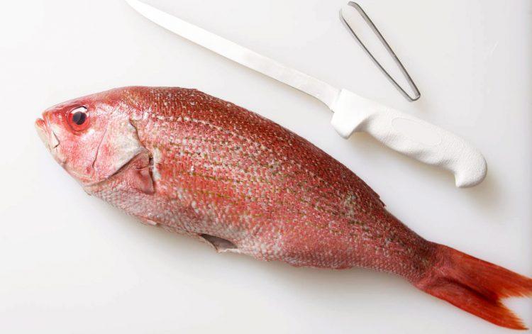 Pesce Pagello appena pulito