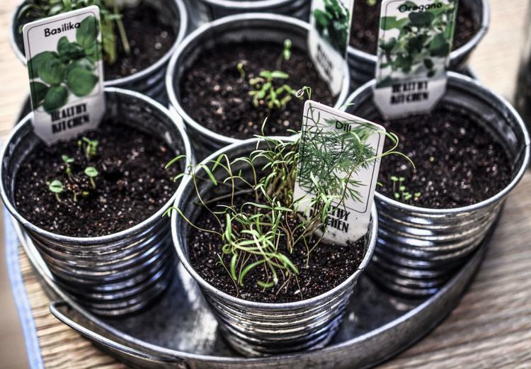 vasetti piantati con erbe aromatiche