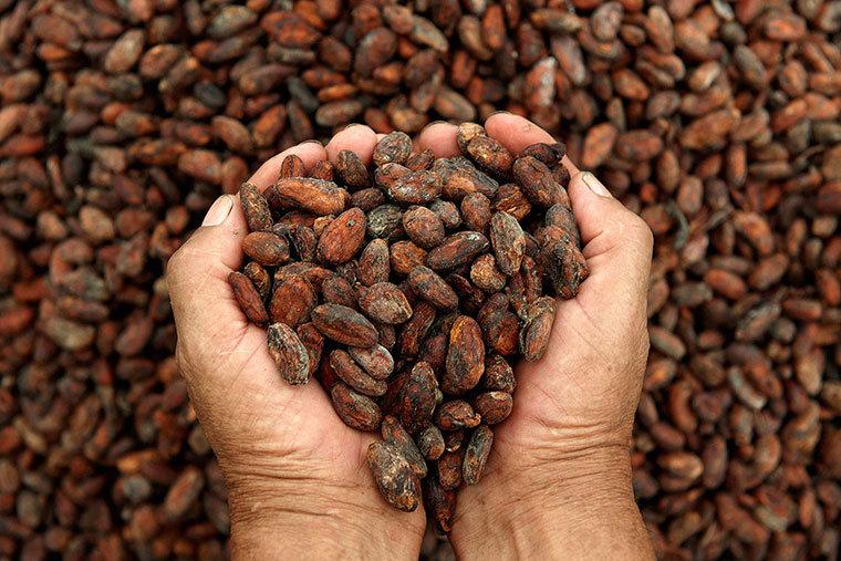 semi di cacao per fare il cioccolato