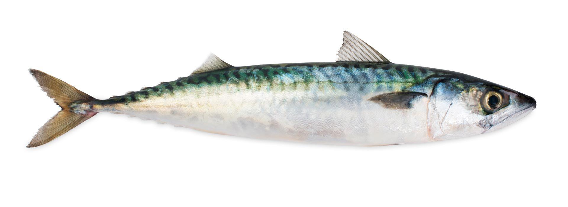 Corso Di Cucina Su Come Cucinare Il Pesce Azzurro Ricette Facili E