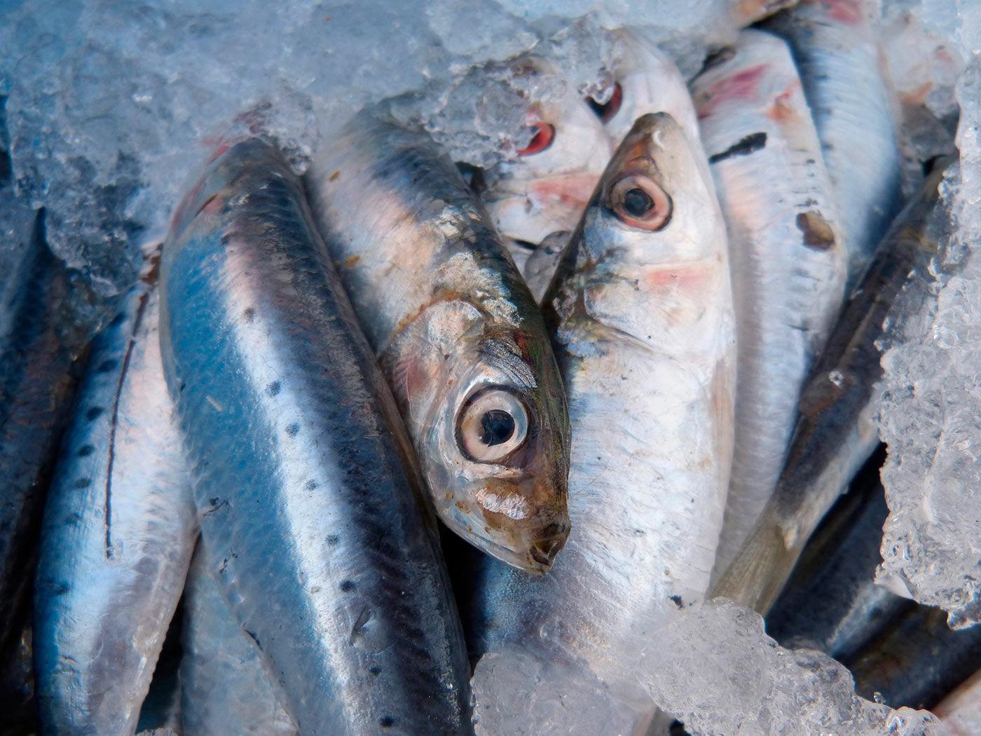 Pesce Azzurro Proprietà Ed Elenco Completo Red Academy